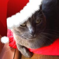 Chat c'est sympa : cliquez sur l'image pour lire gratuitement Le Noël de Grison!